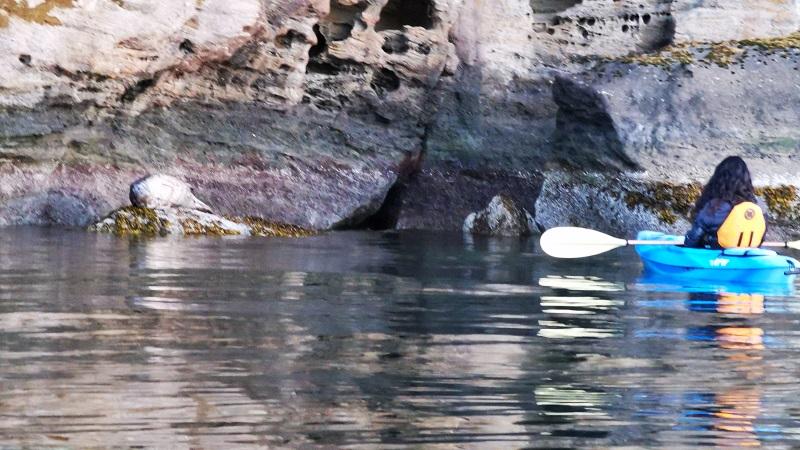 Sidney North Saanich Yacht Club Whale Watching